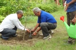 Prof Jatin Bhatt, Vice Chancellor, AUD planting sapling of Elaeocarpus ganitrus (Rudraksh).
