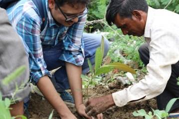Dr Budhaditya Das planting sapling of Madhuca longifolia (Mahua).