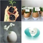 3 idei decorative cu coajă de ou