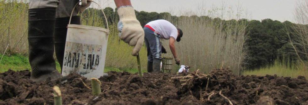 Trabajo con la tierra