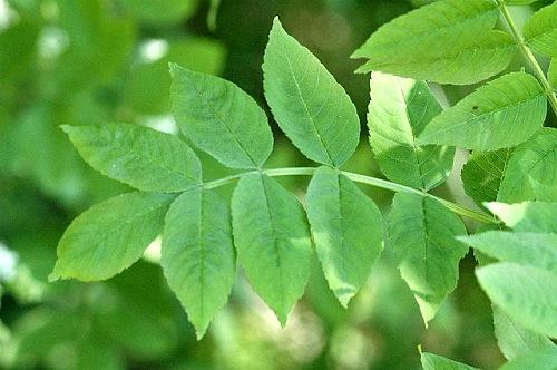 9 Plantas medicinales y beneficiosas para la salud