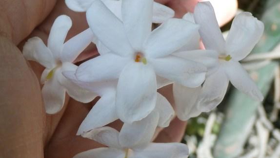 6 aromas relajantes