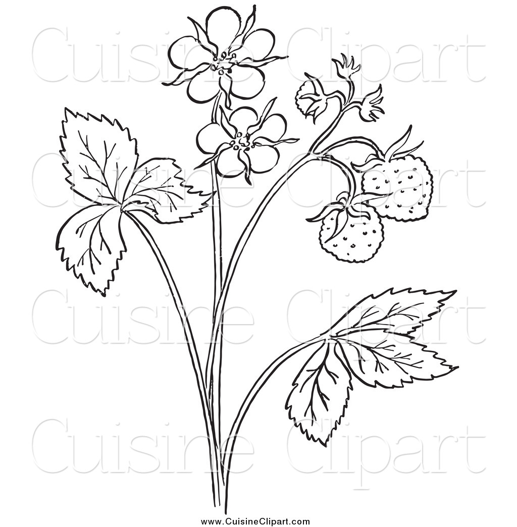 Cuisine Clipart Of A Black And White Strawberry Plant With