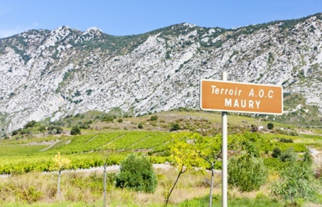 11299943 - vineyar of maury in languedoc-roussillon, france