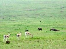 Tanzania–Ngorongoro Crater Coexistence