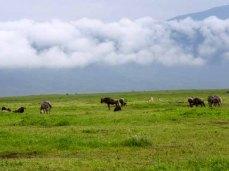 Tanzania–Ngorongoro Crater Coexistence3