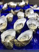 These oysters are huge!