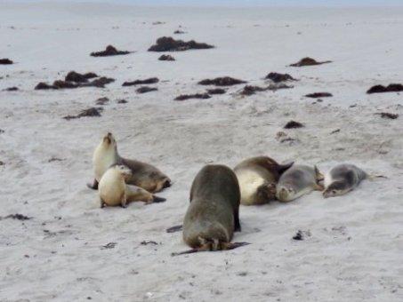 Kangaroo Island, Seal Bay