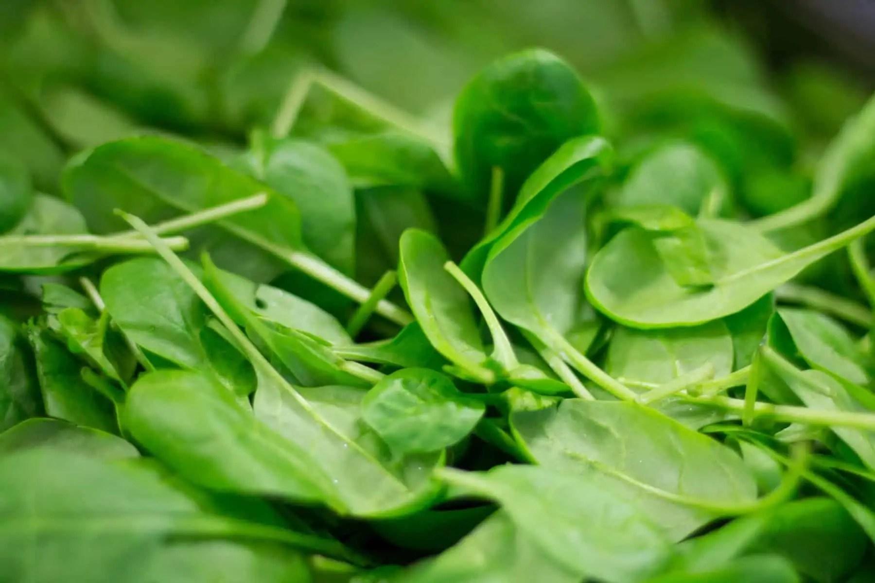 Szpinak – zdrowa zieleń