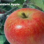 What Are The Best Apples For Apple Pie?