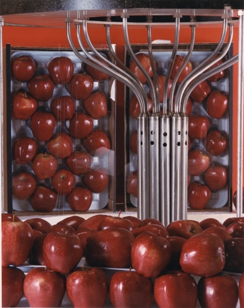 irradiated apples