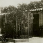 Naval orange tree at Mission Inn, 1910