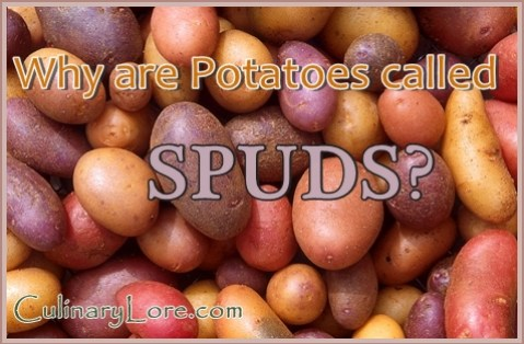 why are potatoes called spuds