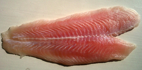 shark meat muscle structure