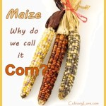 why is maize called corn in America?
