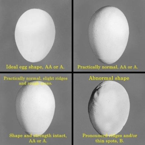 Egg grades determined by shape