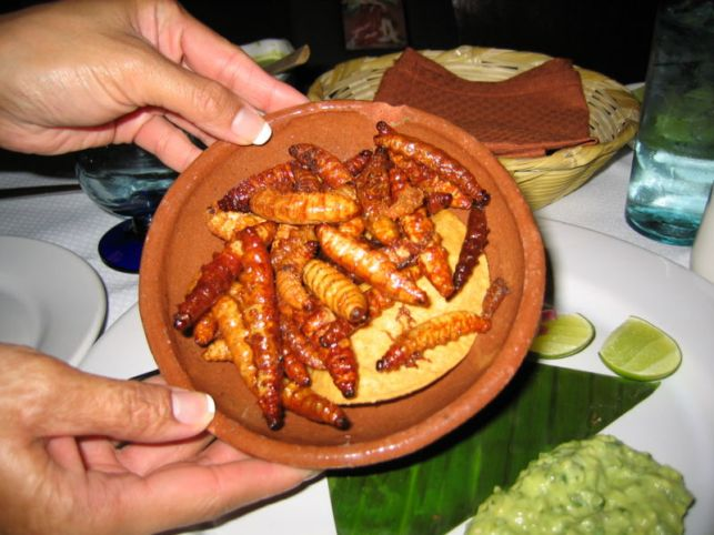 Red Agave or Mescal worms