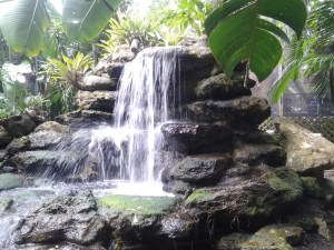 Waterfall at Selby Botanical Gardens