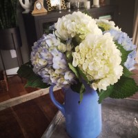 How to Revive Wilted Hydrangeas