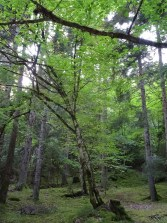 Réserve naturelle de Borjomi