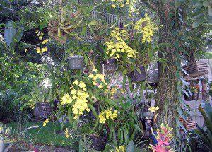 Fora de casa as orquídeas crescem melhor.