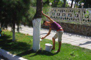 Pintando o tronco de branco.