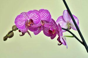 ebook como cuidar e cultivar orquídeas