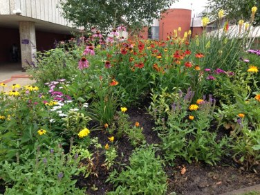 Cultivate-London-Landscaping-Hounslow-Civic-Centre_1009