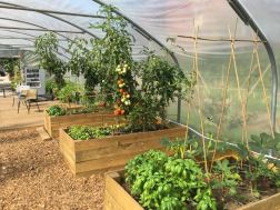 Cultivate-London-Salopian-Kitchen-Garden-August-2016_1027
