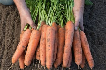 Let them eat veg: Cultivating new way of food access