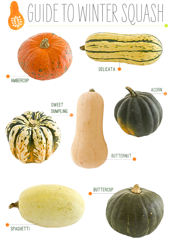 Download the Winter Squash Guide