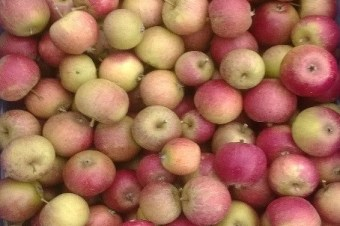 Meet the Suppliers: Tiddly Pommes Apple Juice