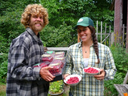 Apprentices harvesting raspberries