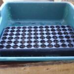 72 cell tray