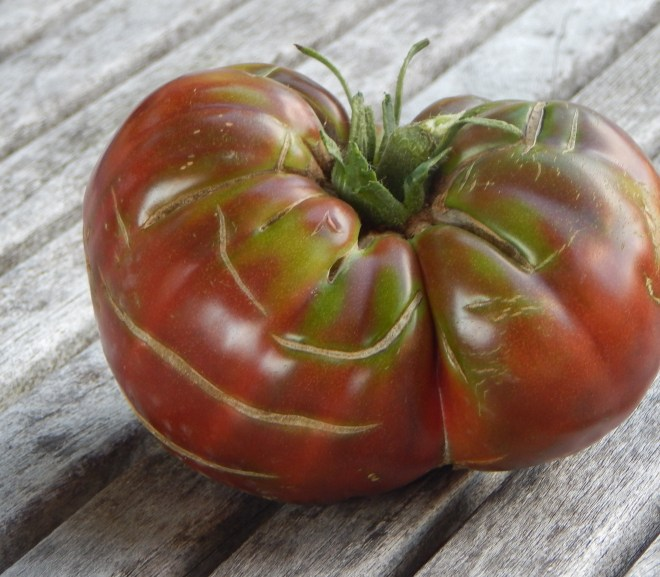 TOMATOES – TWO EARLY VARIETIES WE LOVE