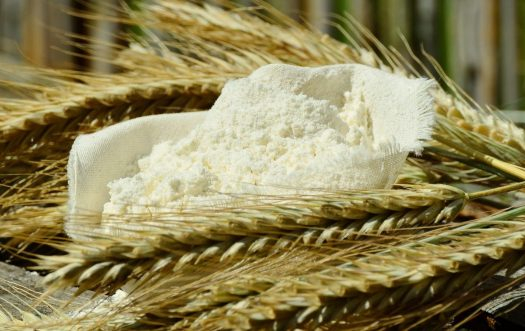 farine supplémentation champignon