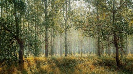 Les arbres et le mycélium ne font t'ils qu'un ?