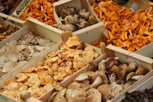 Théoriquement tous les champignons peuvent être cultivés..