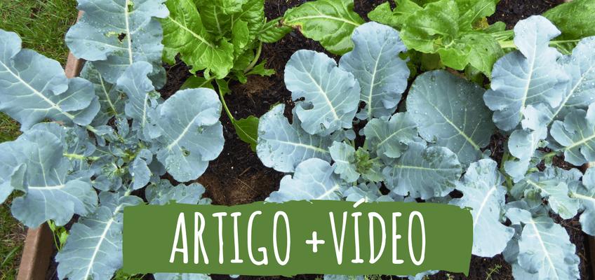 Plantar é fácil… o difícil é manter!