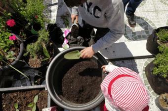 Plantar uma árvore com crianças – 8 dicas práticas