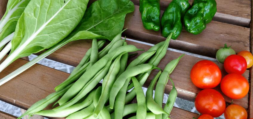 Cultivos da época – Plantar em Julho