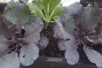 Cultivos da época – plantar e colher em Novembro