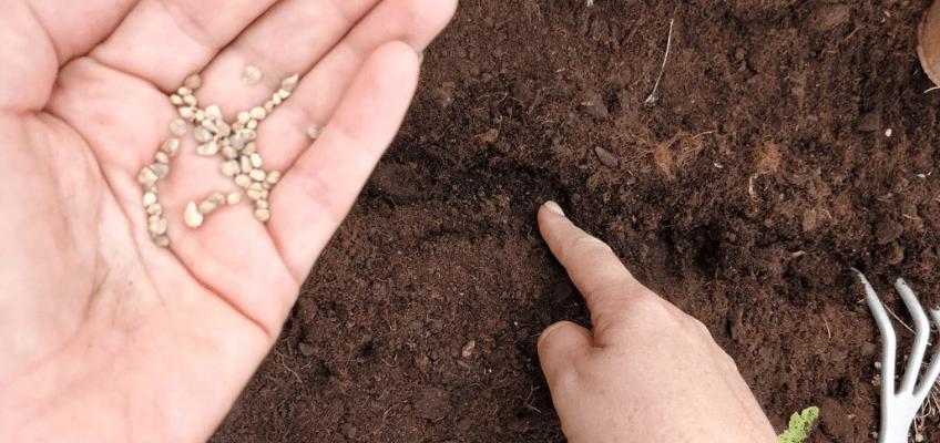 Como semear na horta – Regras básicas