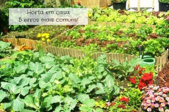 Horta em casa: os 5 erros mais comuns!
