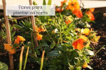 5 Flores para plantar na horta