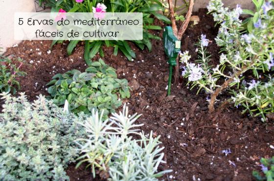 Ervas do mediterrâneo – as 5 mais fáceis de cultivar!