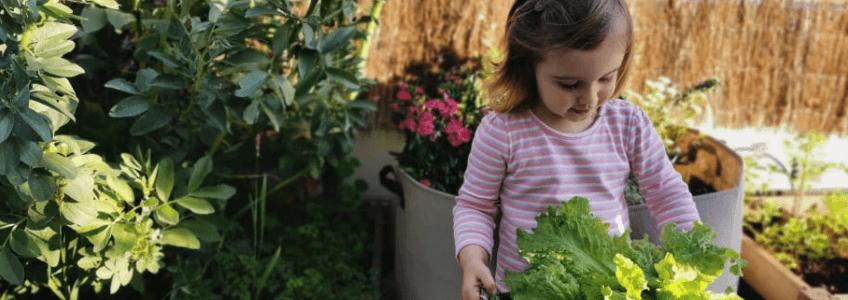 colheitas-na-horta