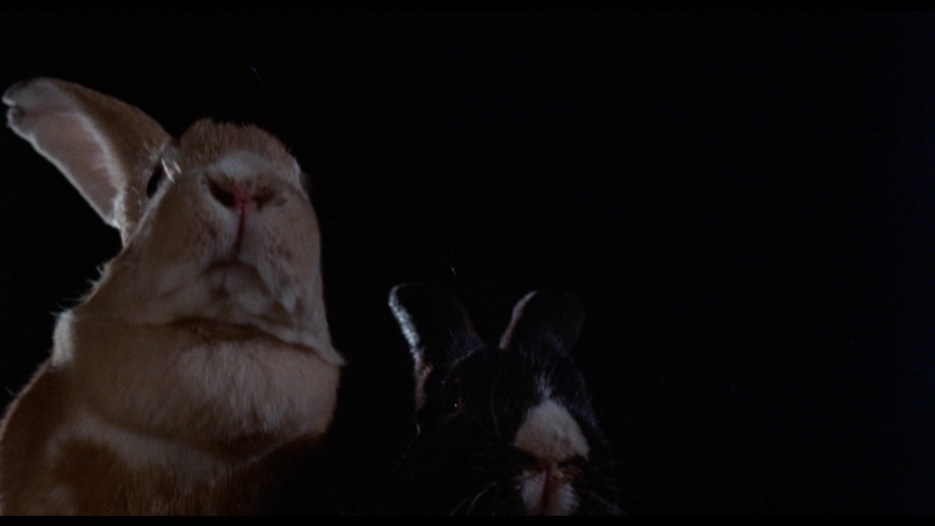 night of the lepus review 1