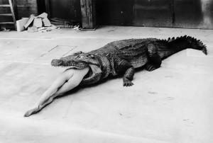 Helmut Newton Crocodile