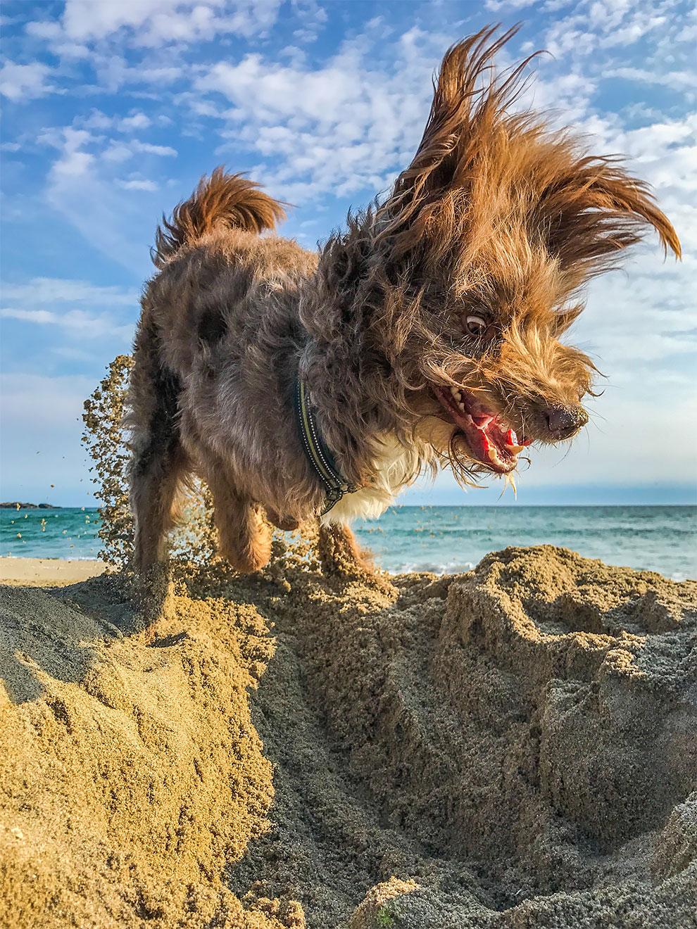 Premios de Fotografia de Animales Domesticos 2017